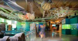 Aquarium Vancouver – Thủy cung lớn nhất Canada có gì ?